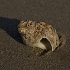 Weathered Whelk on Fahan Beach by George Row