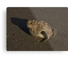 Weathered Whelk on Fahan Beach Metal Print
