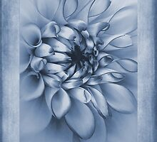 Cyanotype Dahlia  by John Edwards