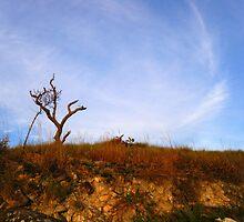 Roraima tree by dalsan