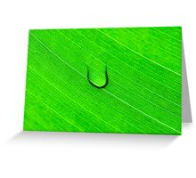 Macro shot of green leaf, nature pattern background Greeting Card