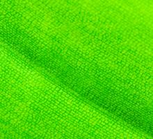 Macro shot of green leaf, nature pattern background Sticker