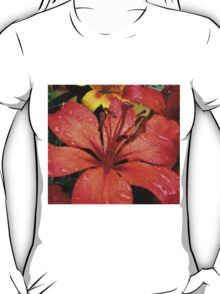 A Refreshing Orange - Lily After Rain T-Shirt