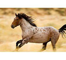Desert Thunder Photographic Print