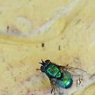 Green fly -original by MistyIslet