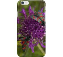 "Greater Knapweed with ""6-spot Burnet"" Moths iPhone Case/Skin"