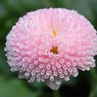 bellis II by Floralynne