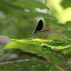 My friend the DragonFly by DAngelo982