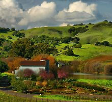 Napa Valley February by Barbara  Brown