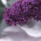 Lilac Love by Sandra Foster