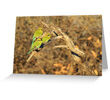 Bee-eater - African Wild Birds - Colorful Friends Greeting Card