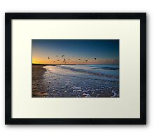 Seagulls at Dusk Framed Print