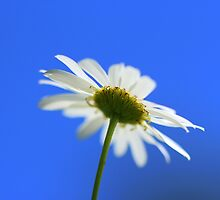 Summertime Blues by ncp-photography