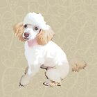T is for Toy Poodle by Ludwig Wagner