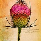 The Teasel by Ludwig Wagner