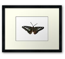 Real Butterfly No. 1 - Striped and Spotted  Framed Print