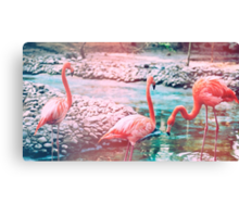 Exotic flamingos Canvas Print