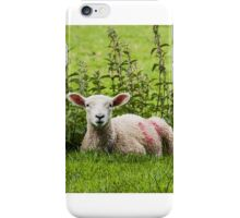 Lamb resting with the nettles iPhone Case/Skin