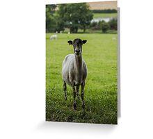 Ewe`s looking Greeting Card