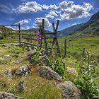 Summer Style  by Darren Wilkes