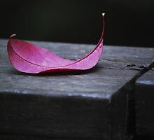 1st Sign of Autumn... by Laurie Minor
