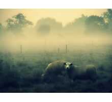 Dreaming of Sheep - JUSTART © Photographic Print