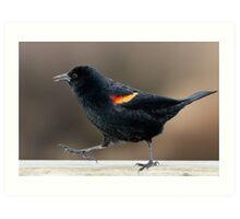 Blackbird Bootcamp Art Print