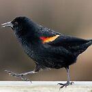 Blackbird Bootcamp by Tom Talbott