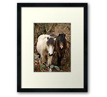 National Trust Ponies Framed Print