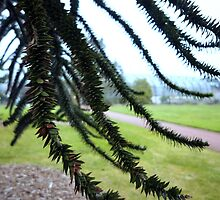 Underneath the Monkey Puzzle by LozMac