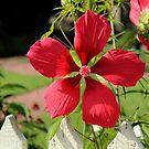 Red Bloom by WeeZie