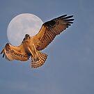 Flying Osprey and Super Moon by Skye Ryan-Evans