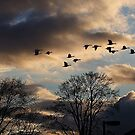 Geese Coming Home by George Cousins