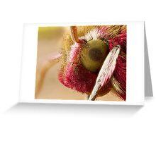 Elephant Hawk moth eye Extreme macro Greeting Card