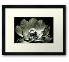 Platinum Lotus Framed Print