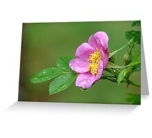 Spring Storm Beauty Greeting Card