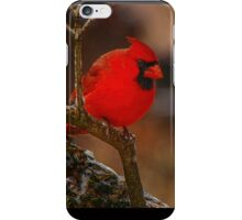 Portrait of a Redbird iPhone Case/Skin