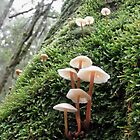 Fungi Group, Mt. Field National Park,Tasmania, Australia. by kaysharp