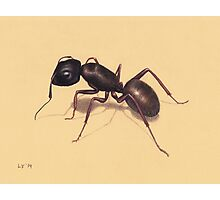 Ant Photographic Print