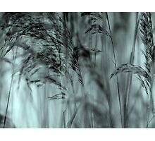 Whispering Reeds  - JUSTART © Photographic Print