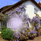 Clothed in Wisteria by Charmiene Maxwell-batten