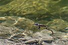 Its a frogs life by Jean Poulton
