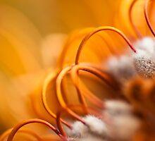 Orange Arches by Liz Grandmaison