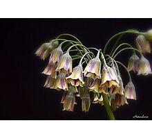 Fairy Bells Photographic Print