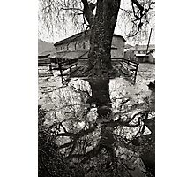 Back to my roots Photographic Print