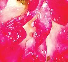 Rose petals in the rain by poppyflower