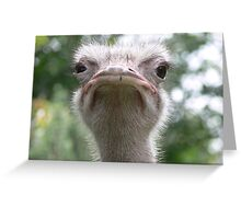 Who you lookin' at? Greeting Card