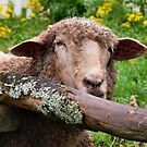 Here's looking at Ewe by PhotosByHealy