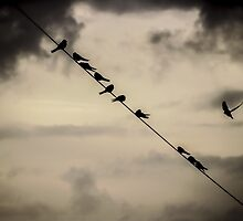 Birds on a wire  by Esentia-art