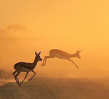 Springbok - African Wildlife Background - Beautiful Motion by LivingWild
